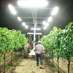 Agriculture LED Lighting